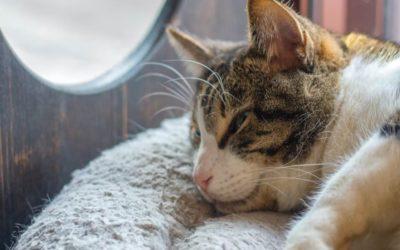 Chat enrhumé ? Le guide pour comprendre le rhume du chat !