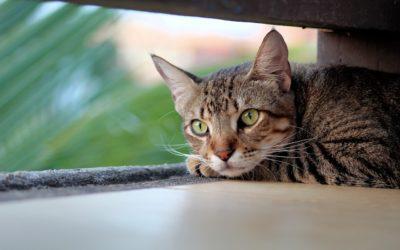 Mon chat tousse, que faire pour le soulager ?
