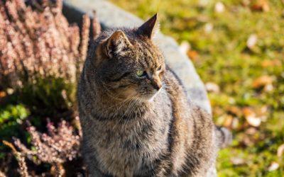 Quelles sont les parasites qui touchent le chat ?