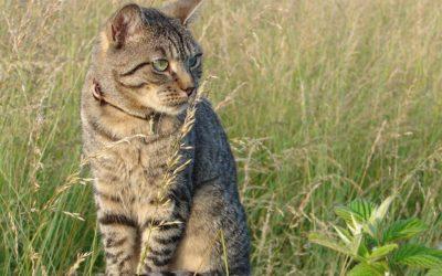 Comment empêcher son chat de fuguer?