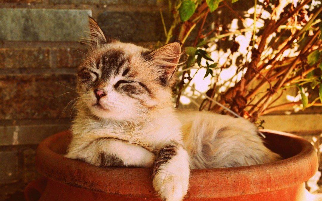Comment choisir une assurance pour mon chat ?