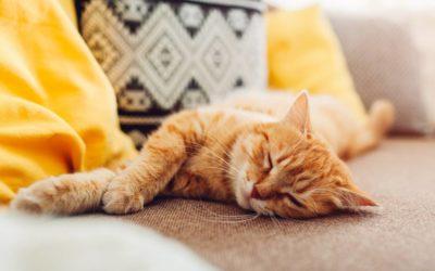 Allergies aux poils d'animaux : 4 solutions naturelles