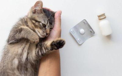 Comment faire avaler un comprimé de vermifuge à son chat ?