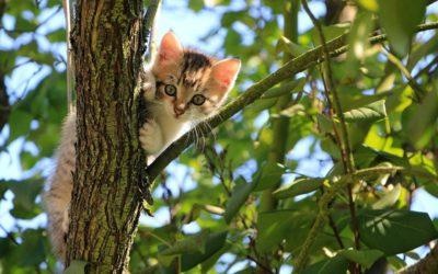 Les solutions pour retrouver son chat rapidement